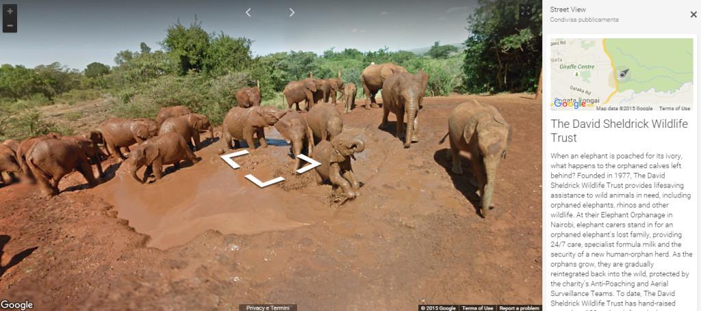 samburu google streetview elephants