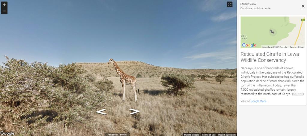 samburu google streetview giraffe