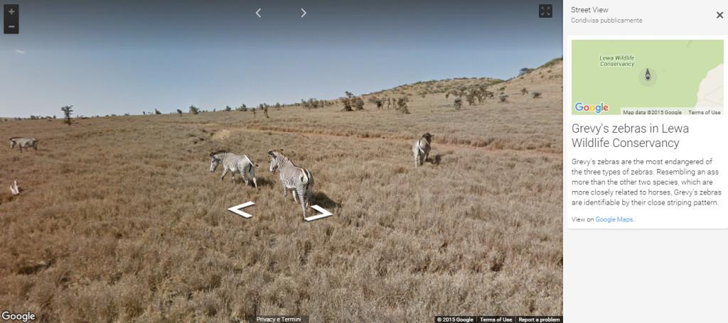 samburu google streetview zebras